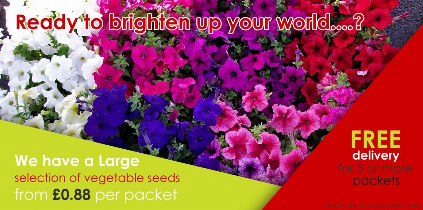 Flower Seeds from as little as £0.88 by Kings