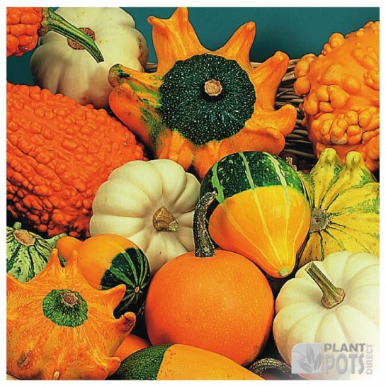 gourd ornamental mix seeds