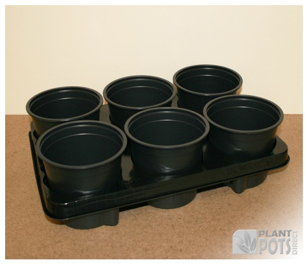 Carry tray with 6x 13cm Round full plastic plant pot (5.1 inch round) 1 litre