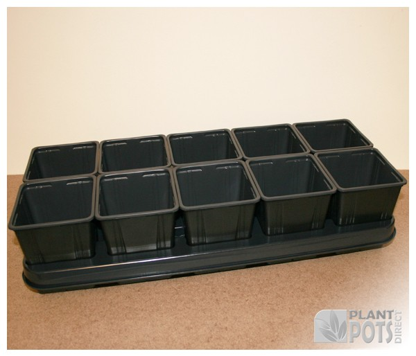 Carry tray with 10x 11cm Square plastic plant pot (4.2 inch square)