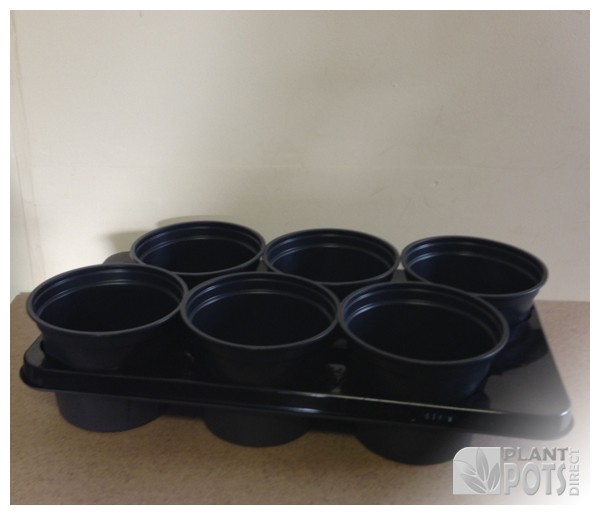 Carry tray with 6x 17cm Round full plastic plant pot