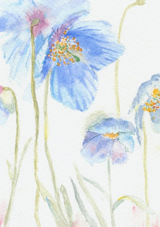 Watercolour depicting blue poppy heads dancing