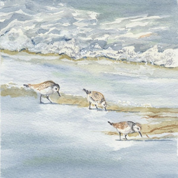 Birds dabbling in the ater scavenging for food at the tide's edge - watercolour