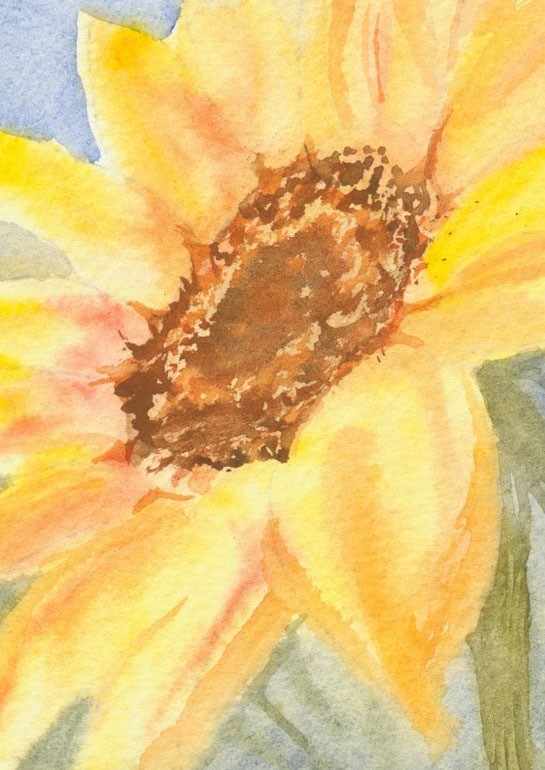 Glorious watercolour showing the sunflower head in all its beauty