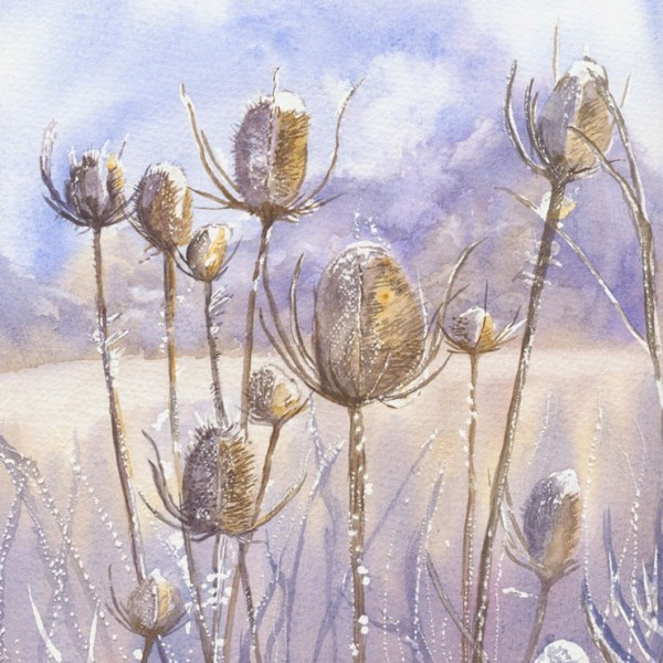 Teasel heads at their beautiful best - watercolour