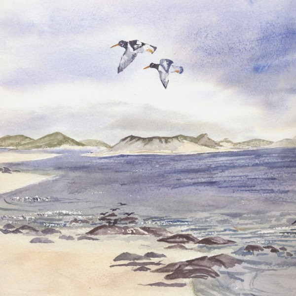Watercolour which catches the sense of freedom of oyster catches in flight