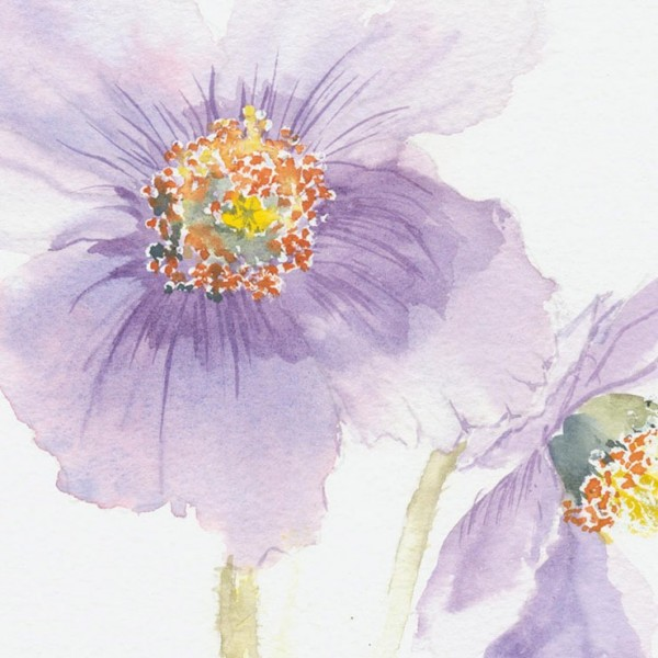 Delicate but dramatic watercolour of purple clematis
