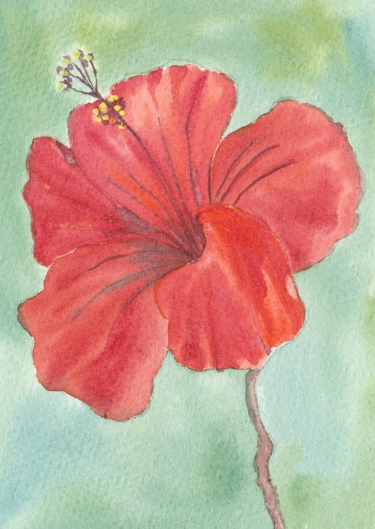Brilliant red flower head - watercolour