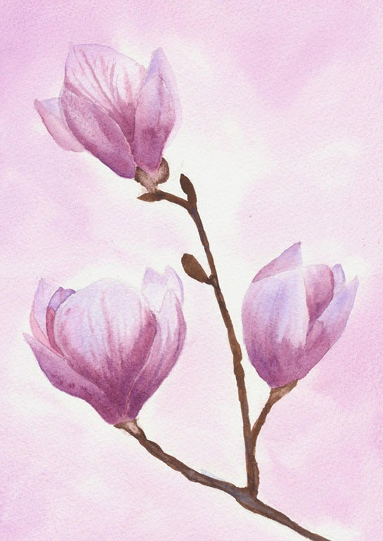 Enchanting watercolour showing three magnolia buds about to open